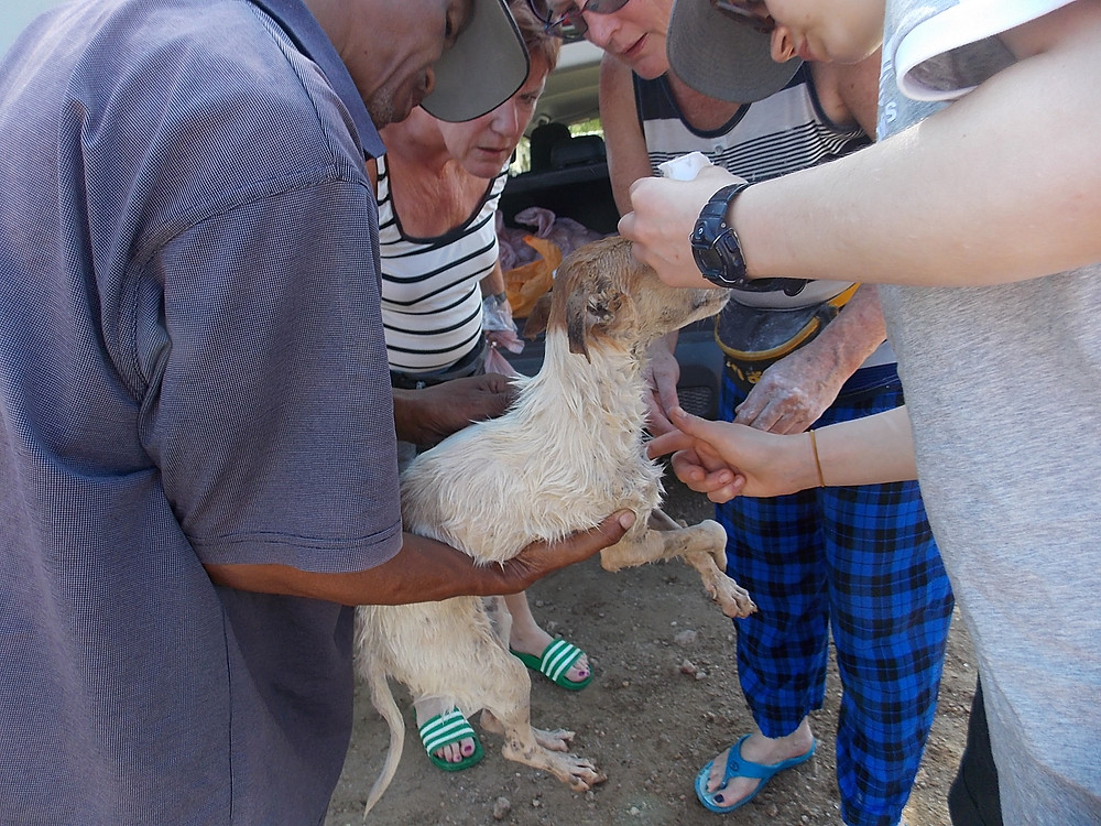 We treat ear and eye infections when we have the funds to purchase the meds