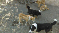 Dogs at the SAA shelter