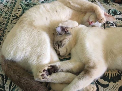 Lilly and Lupin-end of August-at their adopted home
