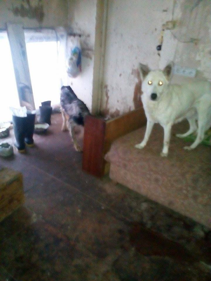 2 dogs stay in the workers' quarters
