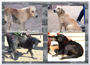 Before-After treatment for mange