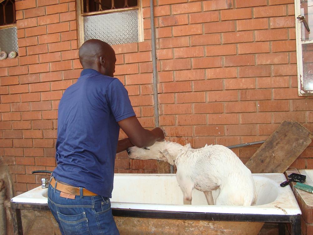 Alex bathes the abandoned dog