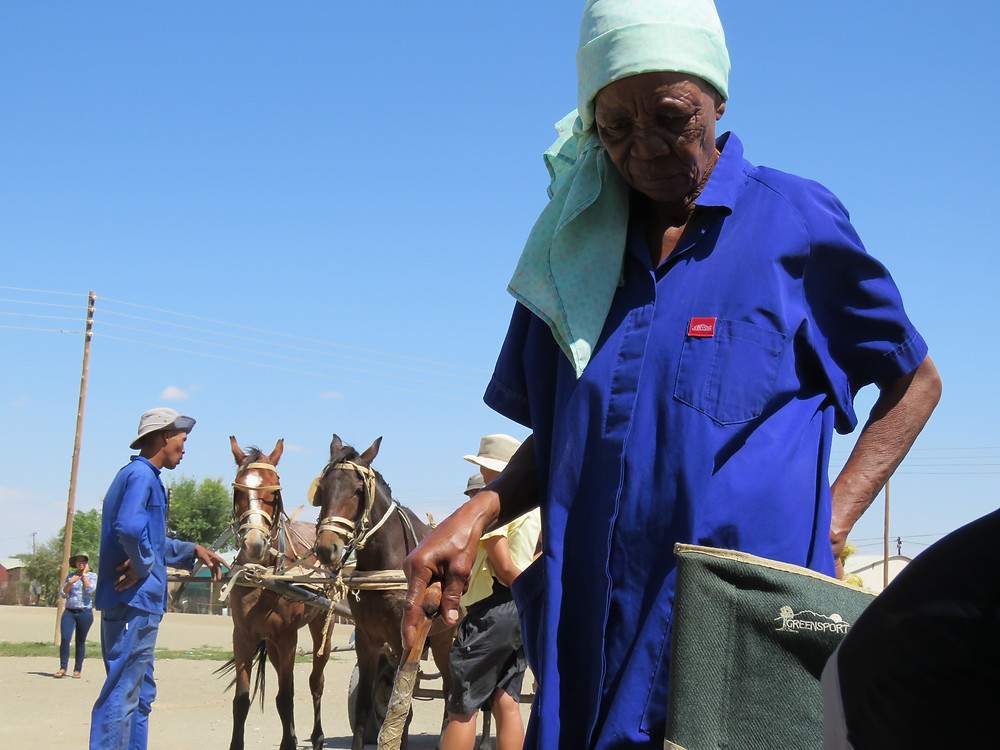 horses get a check up and and parasite treatment