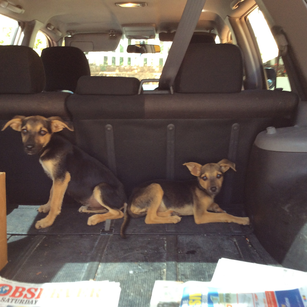 On their way to be spayed