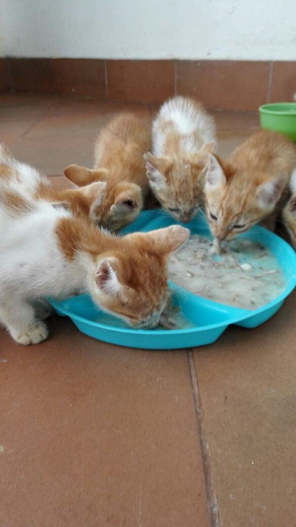 Feeding orphaned kitties, now at the TAWESO shelter