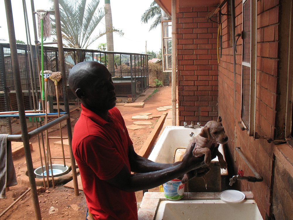 New puppy at The Haven gets a bath