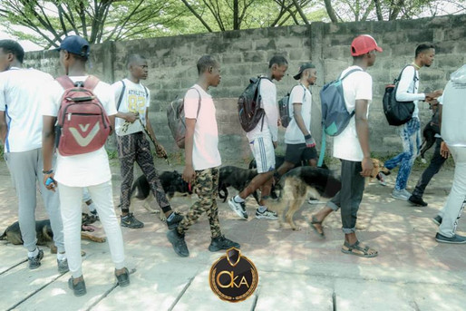 Kinshasa dog walk