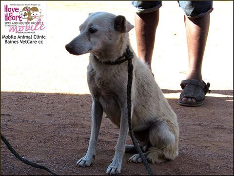 Dog treated for pyometra