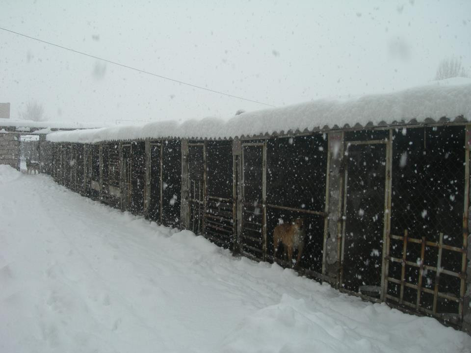 Winter at the SAA shelter-luckily the pens have roofs, thanks to Myra