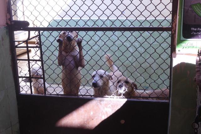 shelter-dog section