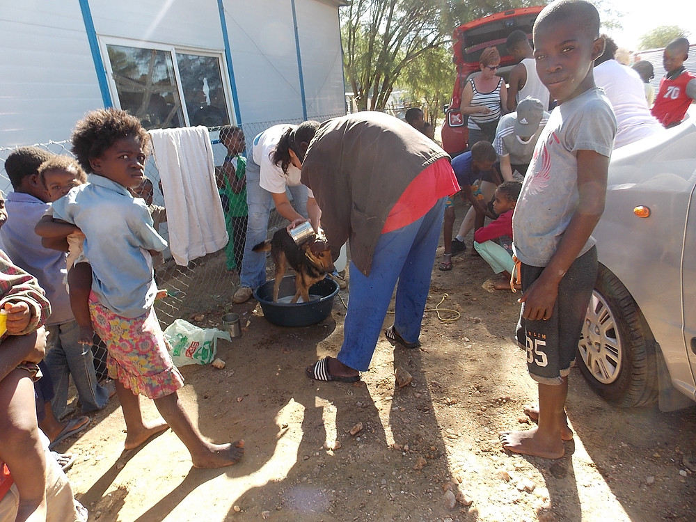 Dipping dogs in Katutura-Feb
