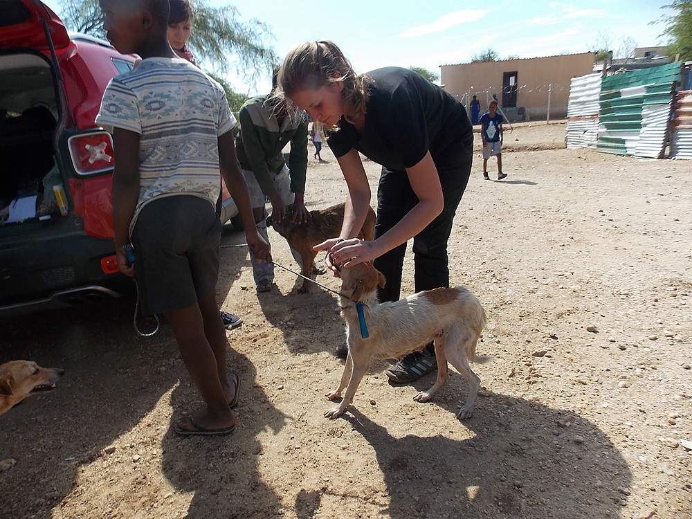 A Katutura dog getting a check up