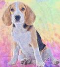 Luther Pet Portrait by Joan.jpg