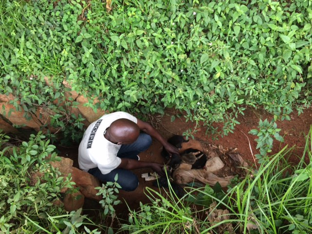Alex rescues a litter of 5 from a ditch in Bukoto
