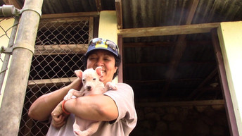 Kingston Community Animal Welfare shelter with Pumpkin and others