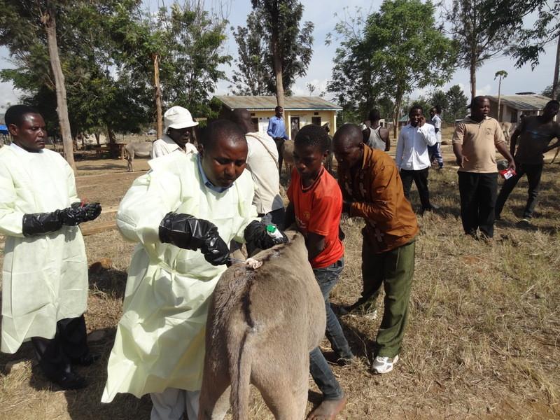TAWESO Donkey Welfare Clinic