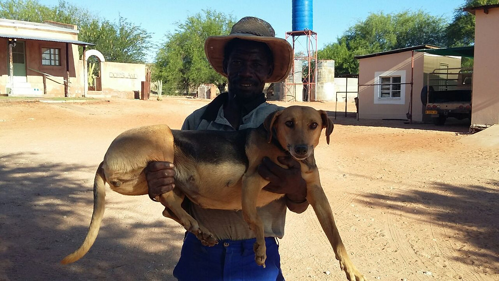A volunteer carrying 1 of the Aranos dogs to be spayed
