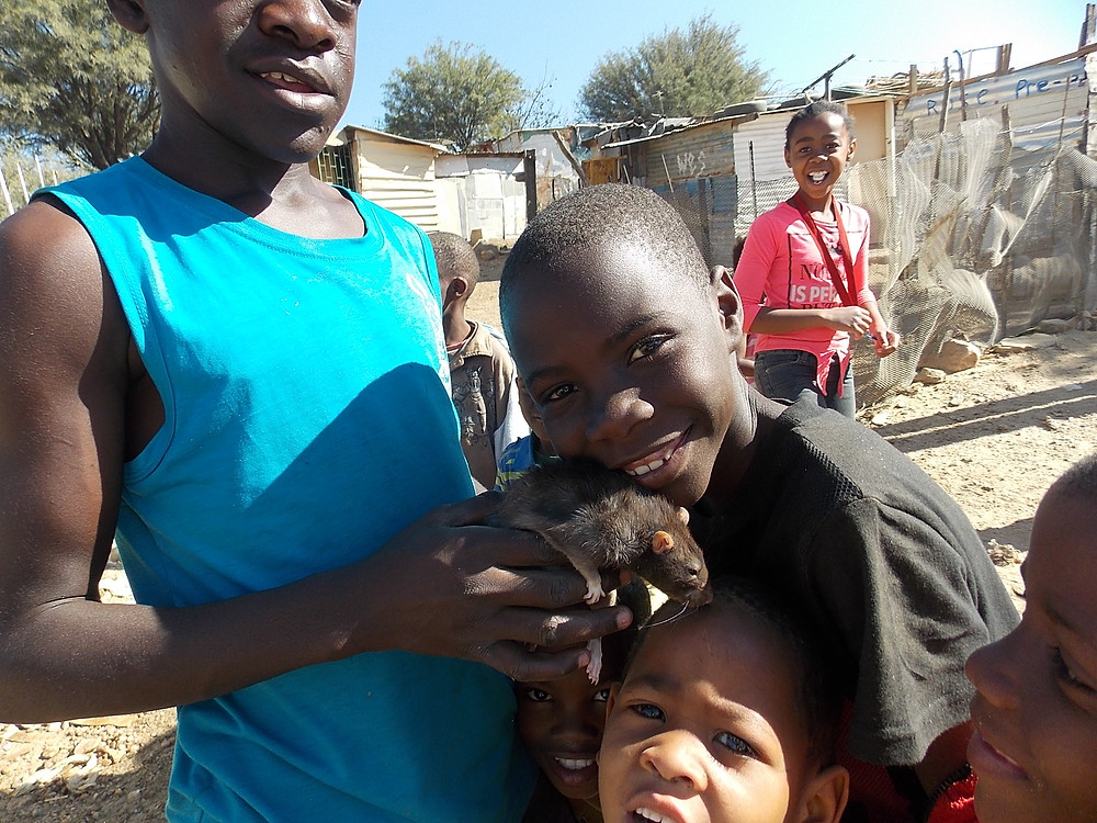 July Katutura visit-a pet rat gets some food and a check up (all looked good!)