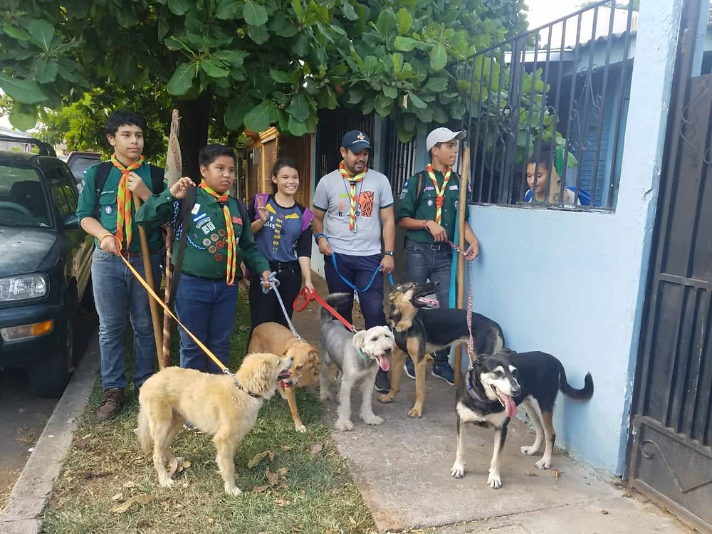 Scouts volunteer at HHHH