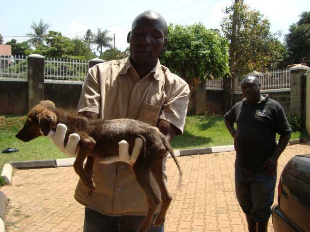 Alex removes puppy with mange from her home
