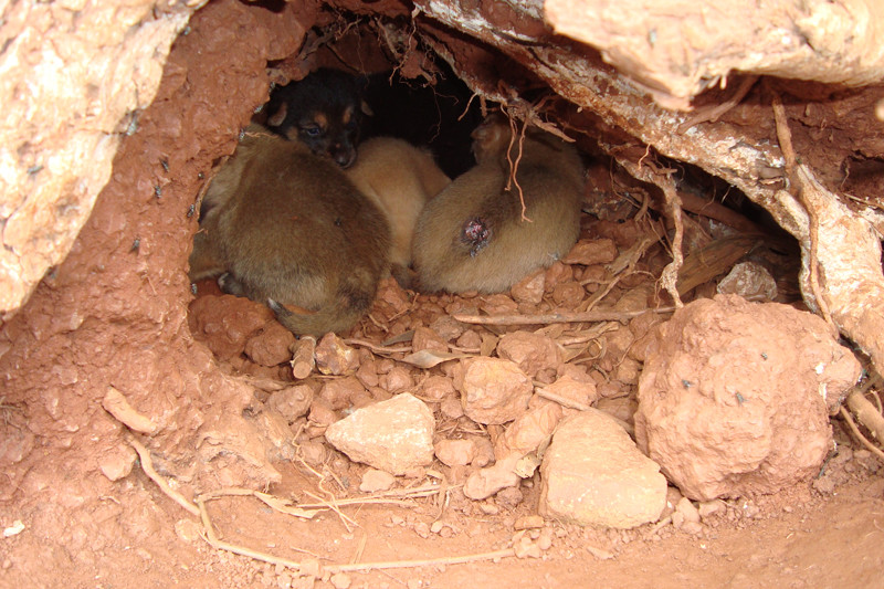 6 puppies rescued from hole in ground home
