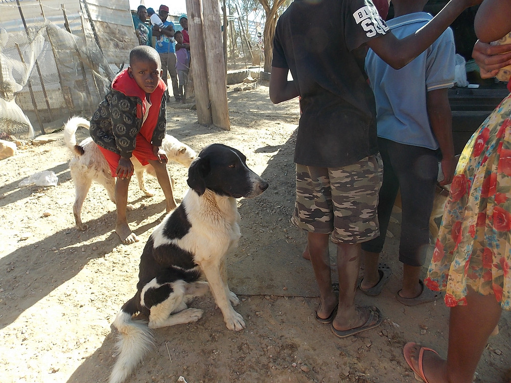 July Katutura visit-we see many children and dogs when we visit, not so many cats