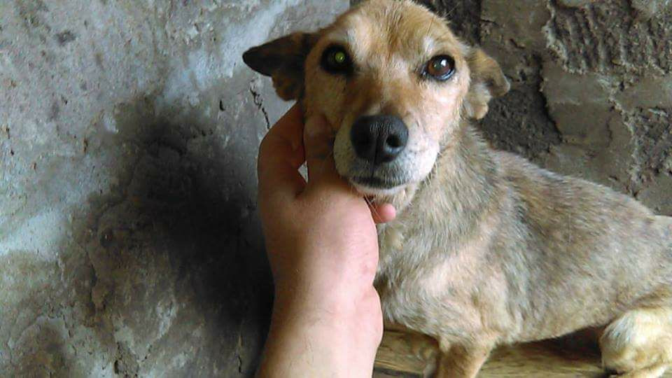 One of the 160 dogs at the SAA shelter, Nov 16