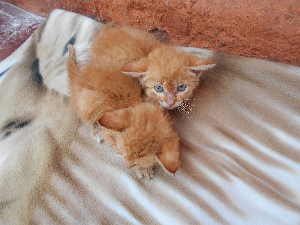 The 2 kitties who were rescued from a pit latrine-after their bath