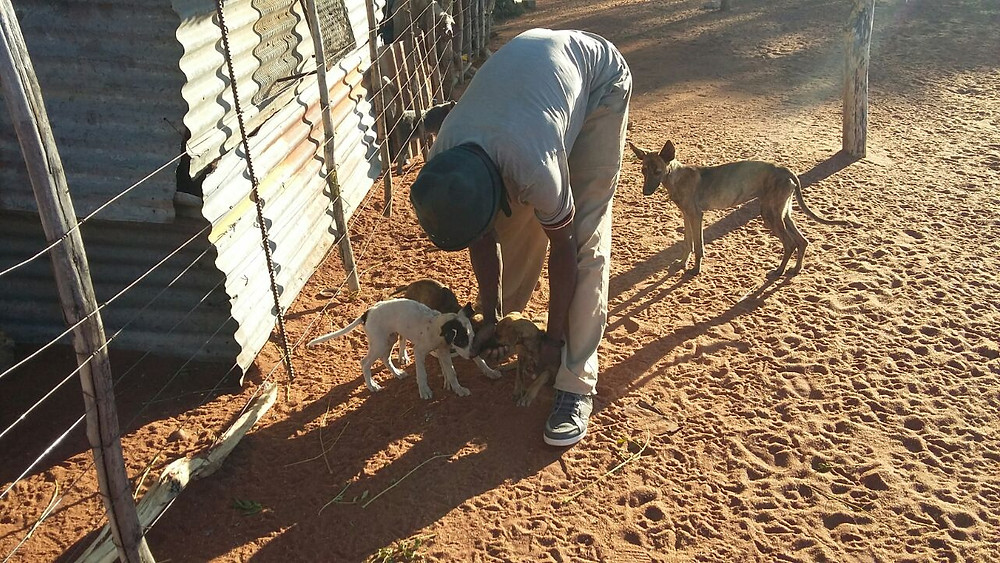 Erika arranged to spay 4 dogs belonging to this farm worker