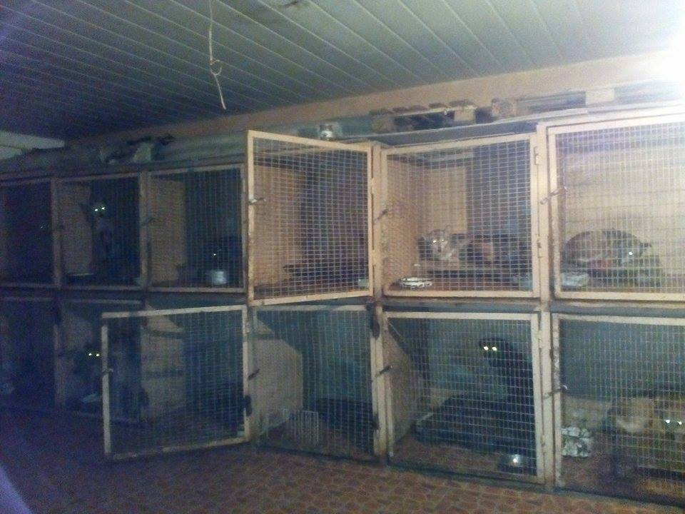 Indoor dogs are in these pens-for their safety-overnight