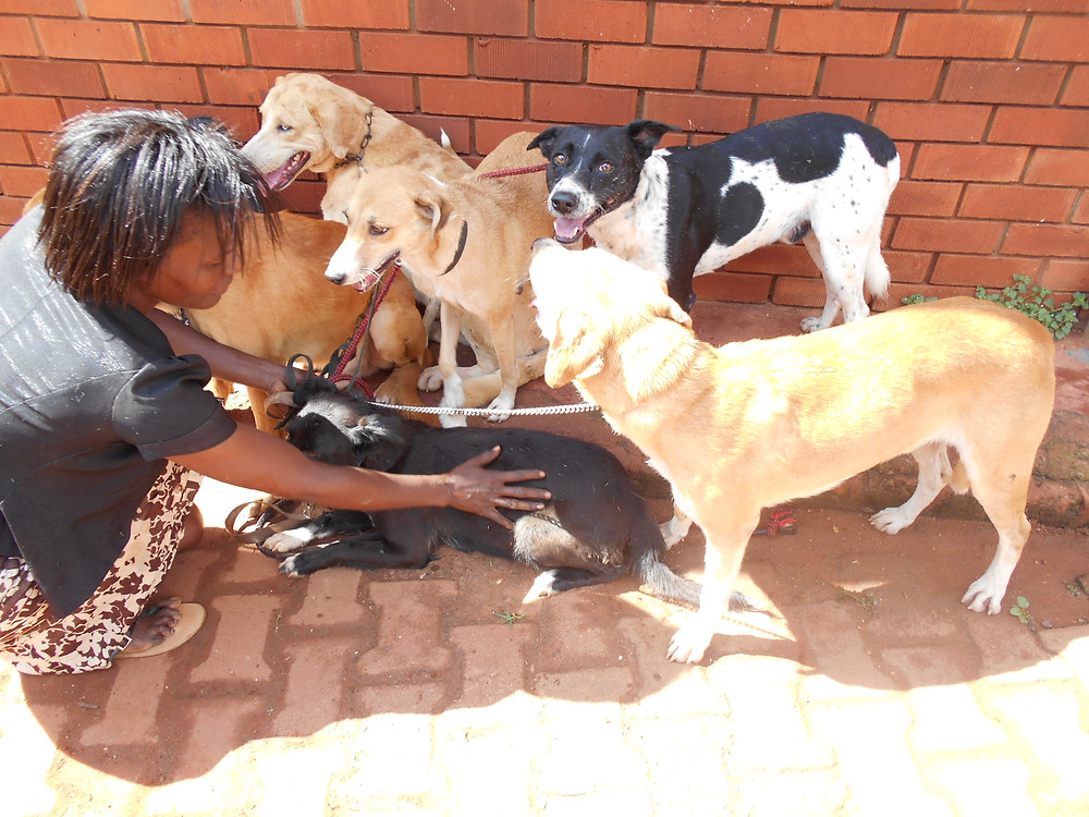 Bisikwa with her 6 dogs at the USPCA Haven