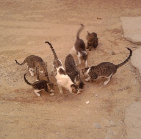 Feral cat colony in Karibib