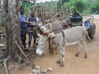 Donkey owners with their donkeys