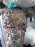 Dog at Walvis Bay with severe mange (after photo is above)