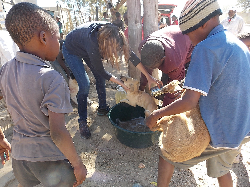 3 June Katutura visit-dipping dogs