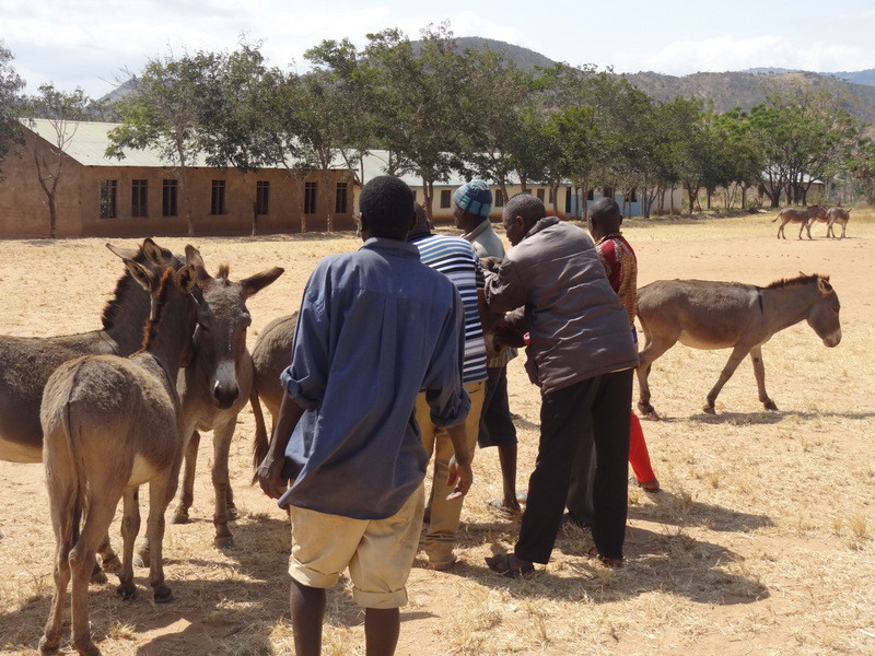 The donkey outreach clinic-village 1