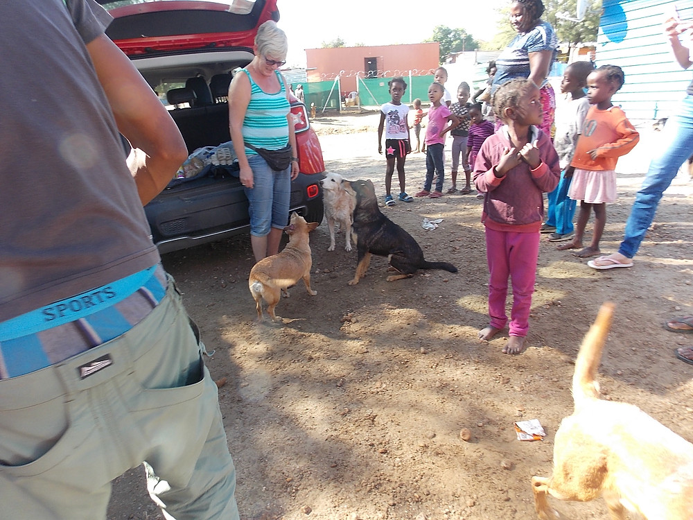 The Katutura Project brings lots of kids, dogs, and cats out for a fun day of animal care