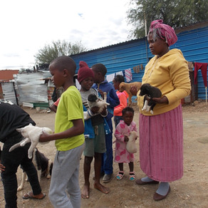 Katutura Pet Care Project-Back in the Saddle Again