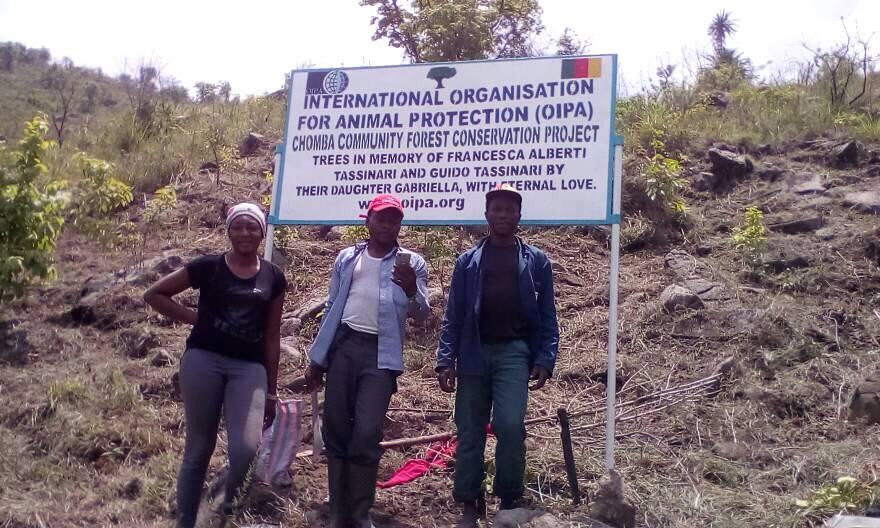OIPA-Cameroon volunteers at the afforestation project site