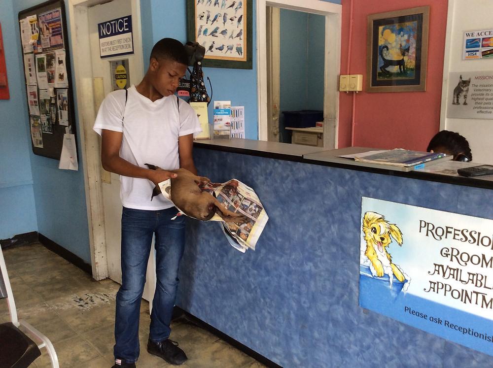 Vet clinic worker carries Sheena inside (Deborah was in her work clothes)