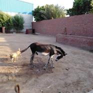 One of the TOL donkeys