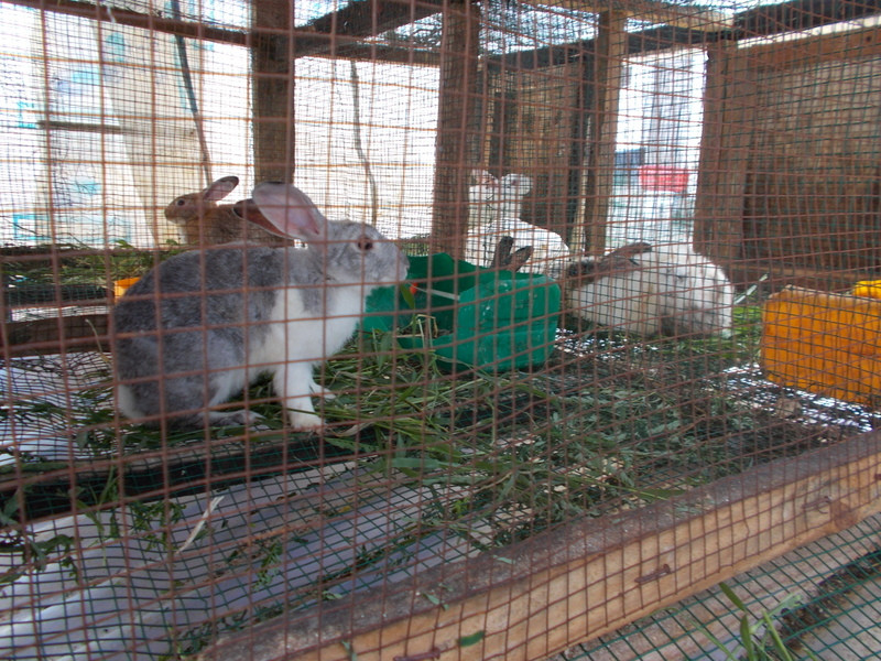 TAWESO rescued bunnies