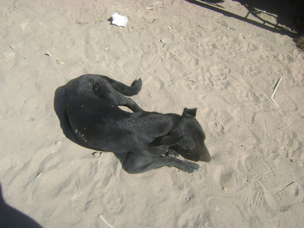 Dog hanging out in Hargeisa