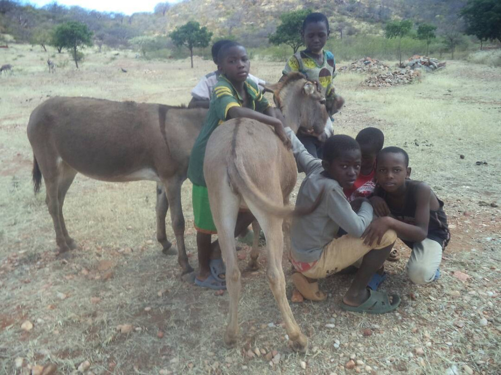 Some of the children who work with donkeys-they were trained in socialization and care