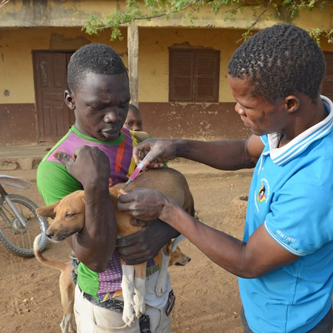 Breaking News: AKI SUPPORTS A VET CLINIC IN KUKURUZUA, GHANA