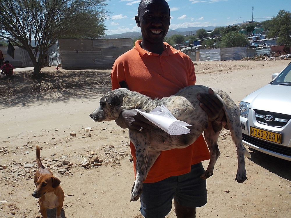 A pampered pet in Katutura!