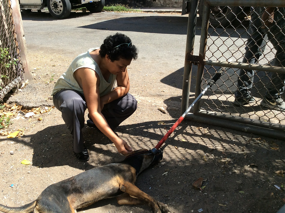 Dog is captured and can now be treated