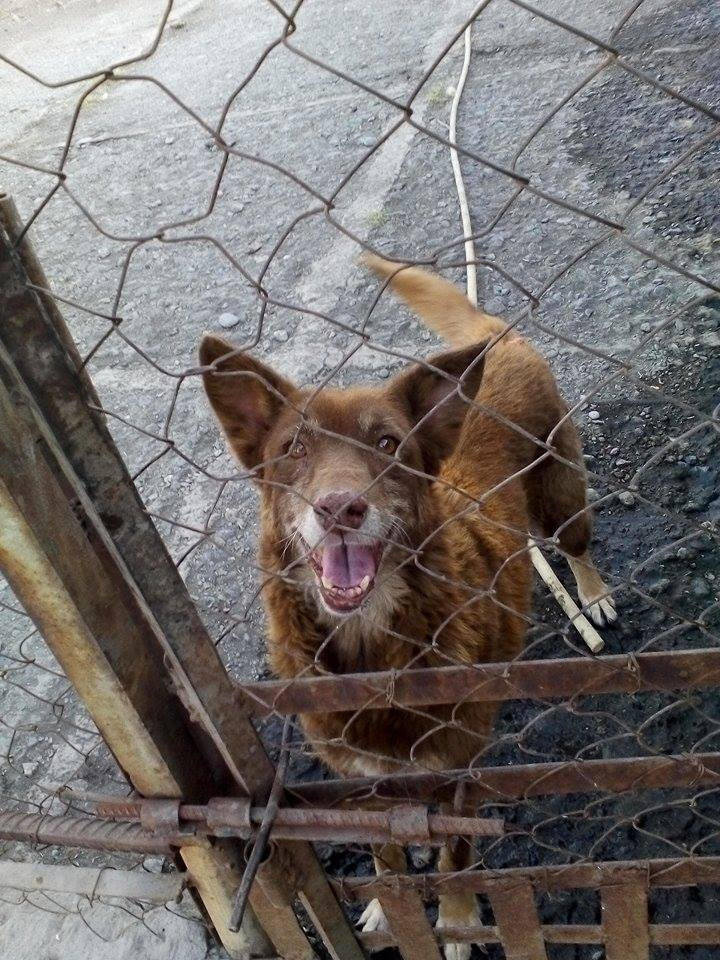 One of the happy dogs at the Save the Animals-Armenia shelter