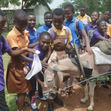 Students meet the LIPREC donkey
