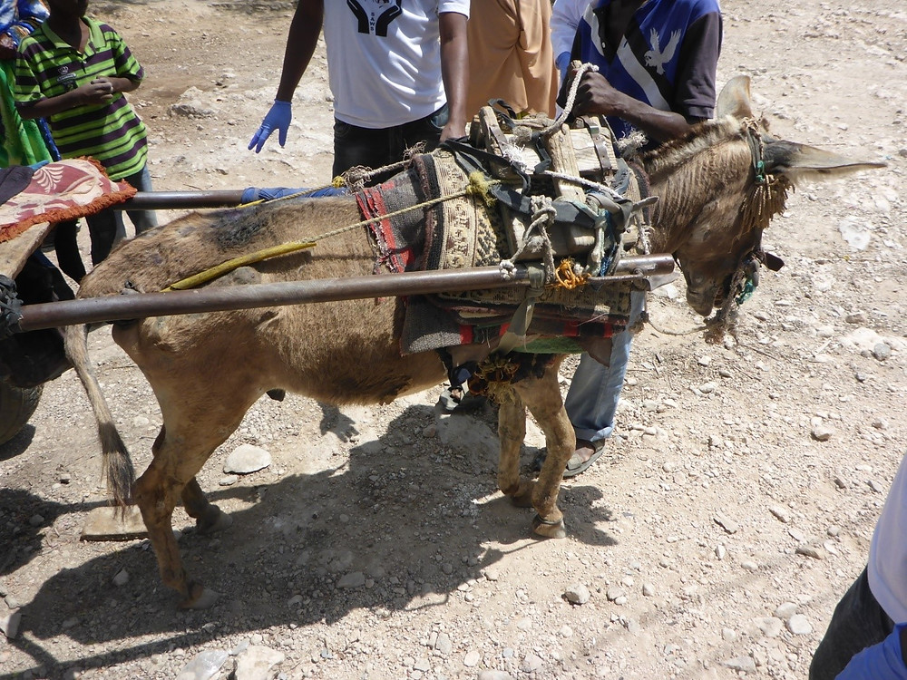 Abused donkey is pulling 200 litres of water